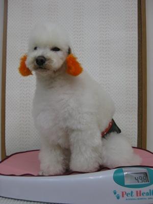2010_0316_taijyuukei.jpg