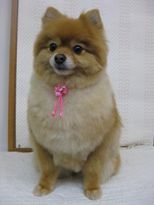 2010_0319_momoko.jpg