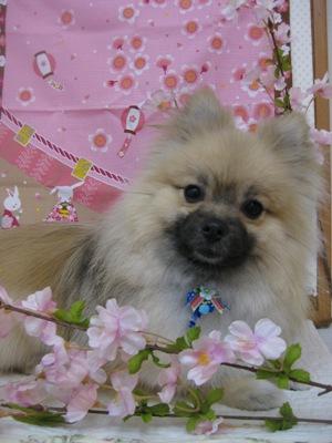 2010_0401_sasuke.jpg