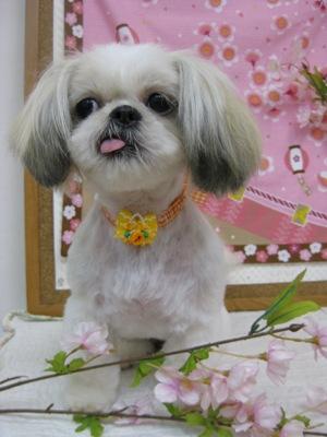 2010_0411_muku.jpg