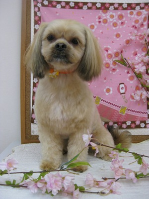 2010_0418_moko.jpg