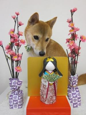 2011_0223_bibi.jpg
