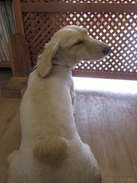 2011_0513_rannko.jpg