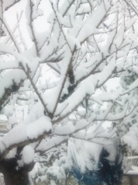 2012_0229_yuki2.jpg