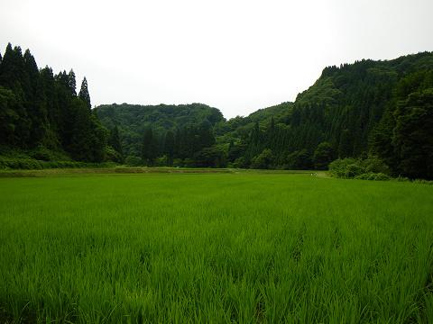 田園風景090714