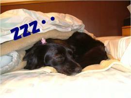 おやすみ~