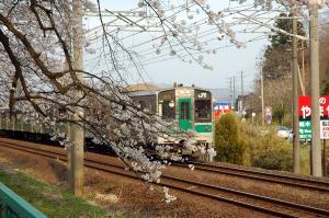 411sakura_10.jpg