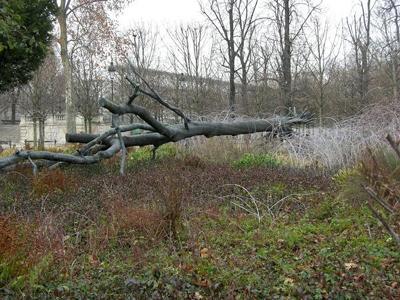 penone_arbre3.jpg