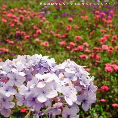 36_convert_20090622200934.jpg