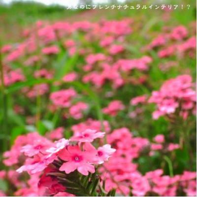 63_convert_20090805011022.jpg