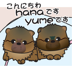 __tn_hanayume.jpg