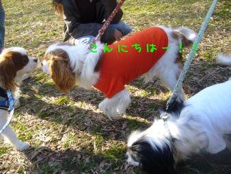 090208_hikichidai02.jpg