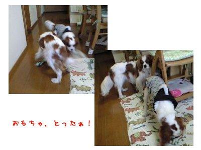 090208_yokosanhouse06.jpg