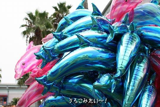 20080915-2-3.jpg