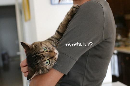 うんうん可愛い~!8