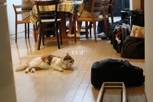 鼻の下を伸ばす飼い主と飼い猫の図18