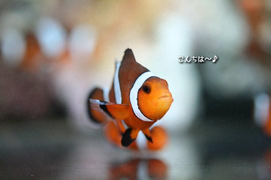 20080913-ポニョ?ニモ?5