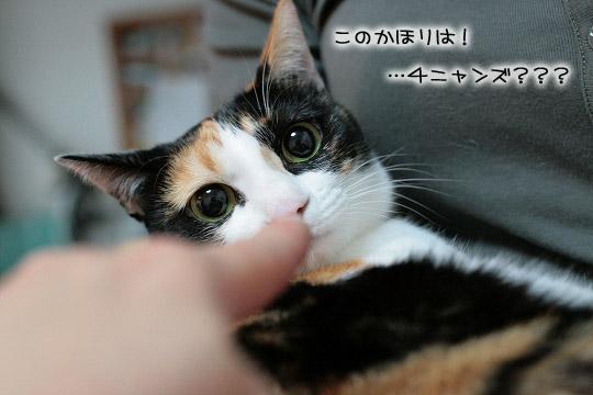 大きな黒目に姉さん~13