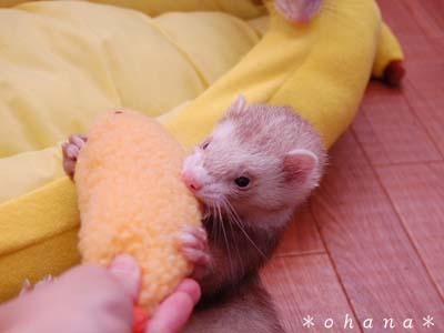 天ぷらに食いつく