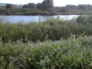 多摩川河原
