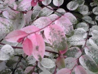 紅と緑の葉