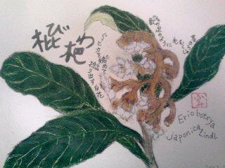 枇杷の花イラスト