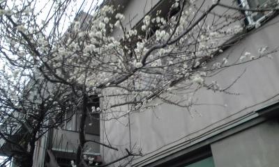 梅と古アパート