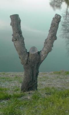 手を挙げている樹