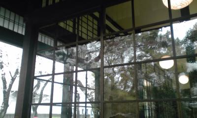 ガラス窓桜