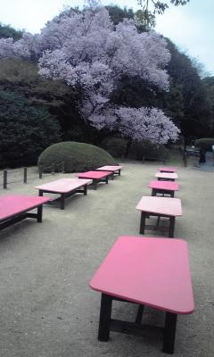 桜カフェ椅子