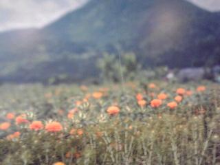 紅花パネル