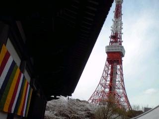 タワー桜五色幕