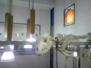 標本と回廊