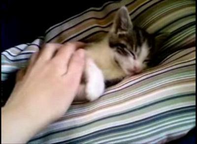 おねむな子猫たち