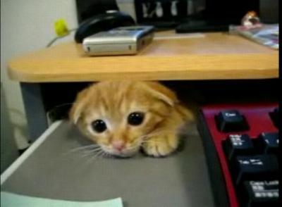 隙間好きの子猫
