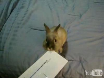 手紙を開封するうさぎ