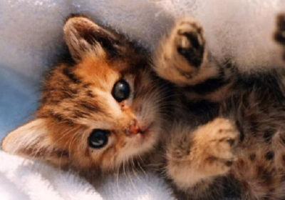 最終兵器子猫