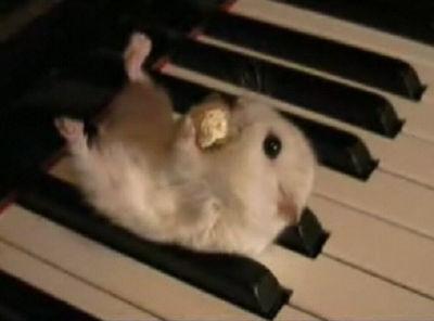 ピアノの上でポップコーンを食べるハムスター