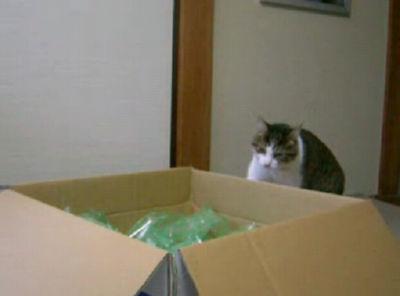 ネコがブートキャンプを始めたんです!><;