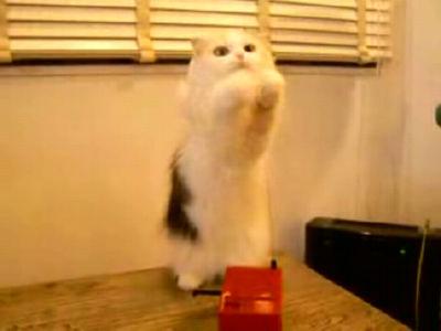 テルミンを演奏するネコ