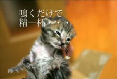 赤ちゃん猫拾いました vol.1 修正版