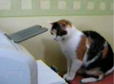 猫 VS プリンター