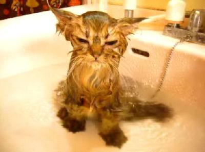 萌え死にさせられる前に湯攻めにしてみた。
