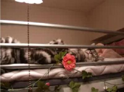 ロフトベッドでぐっすり寝る猫(=^・^=)