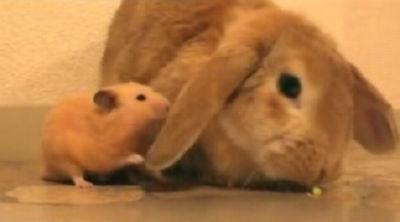 キンクマとウサギ(PieとMomo)
