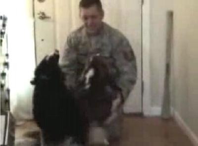1年2ヵ月ぶりにイラクから帰ってきた主人と喜ぶ2匹の犬