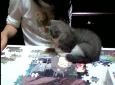 遊び相手をパズルに取られた子猫