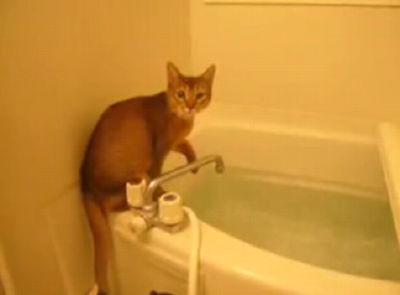 お湯加減を確かめる猫