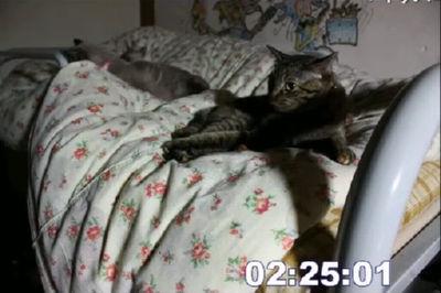 飼い主が寝ている間、猫は一体何をしているのか