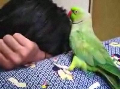 【柴犬りょう&ローズ】ローズのキス(08年10月15日)